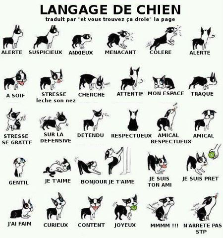 le langages du chien